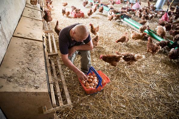 Environmental Conservation「Organic Food Production Reaches Record Level」:写真・画像(9)[壁紙.com]