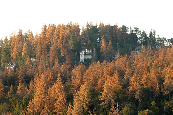 Prevention「Beetles Bring Devastation And Extreme Fire Danger to Southern California Forests」:写真・画像(12)[壁紙.com]