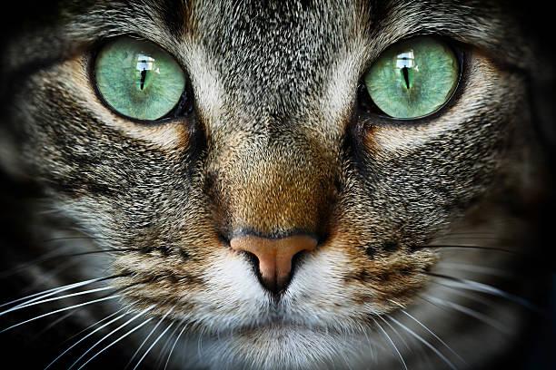 Feline:スマホ壁紙(壁紙.com)
