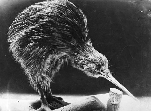 Kiwi「Kiwi」:写真・画像(7)[壁紙.com]
