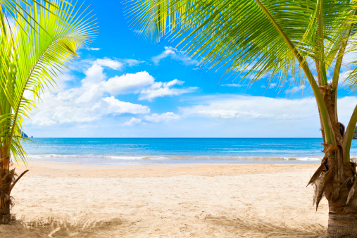 Island「Tranquill tropical island beach in the Caribbean with palm trees」:スマホ壁紙(4)