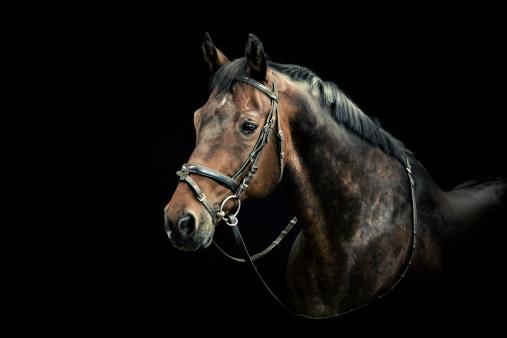 Horse「Horse Portrait」:スマホ壁紙(12)