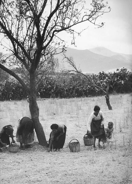 1950-1959「Almond Harvest」:写真・画像(13)[壁紙.com]
