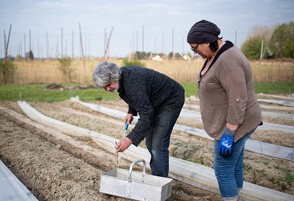 Asparagus「Locals Help Harvest During The Coronavirus Crisis」:写真・画像(3)[壁紙.com]