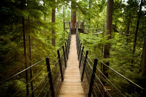 Boreal Forest「Capilano Suspension Bridge」:スマホ壁紙(19)
