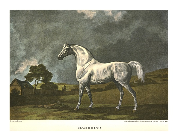 Horse「Mambrino」:写真・画像(1)[壁紙.com]