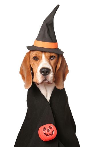 Halloween costume「Canine Sorceress」:スマホ壁紙(7)
