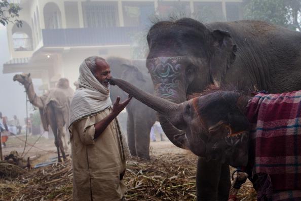 Setting「Bihar Hosts One Of Asias Largest Cattle Fairs」:写真・画像(7)[壁紙.com]
