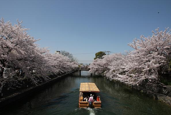 Tourism「Cherry Blossom In Full Bloom In Kyoto」:写真・画像(14)[壁紙.com]