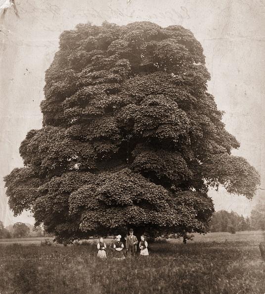Tree「Edgeworthstown」:写真・画像(19)[壁紙.com]