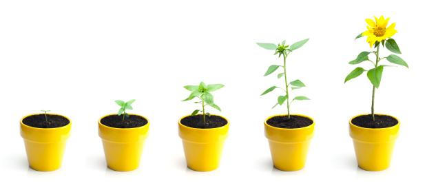 Five Objects「Sunflower Growth」:スマホ壁紙(7)