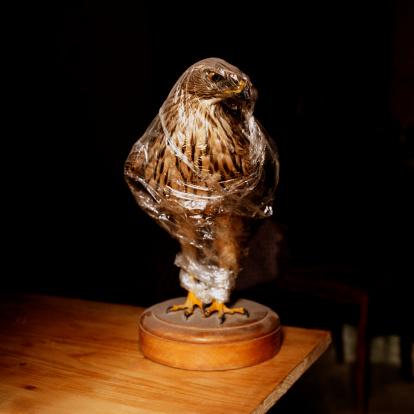 背景「Statue of hawk wrapped in plastic」:スマホ壁紙(14)