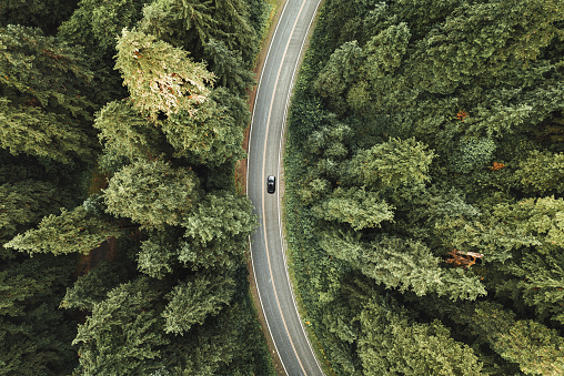 自然の景観「北米の森の曲がりくねった道」:スマホ壁紙(12)
