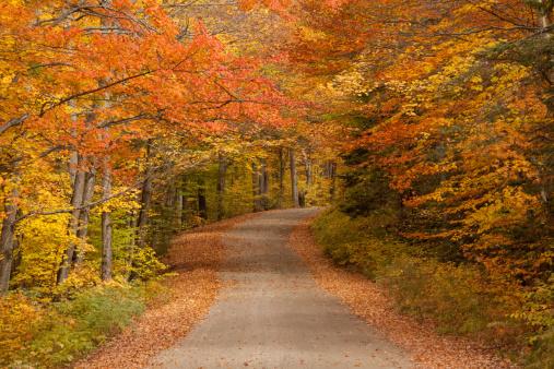 Aspen Tree「Winding Road Through a Forest」:スマホ壁紙(9)