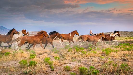 Stallion「Cowboy Rancher Bringing Back Home Herd of Young Wild Horses USA」:スマホ壁紙(13)