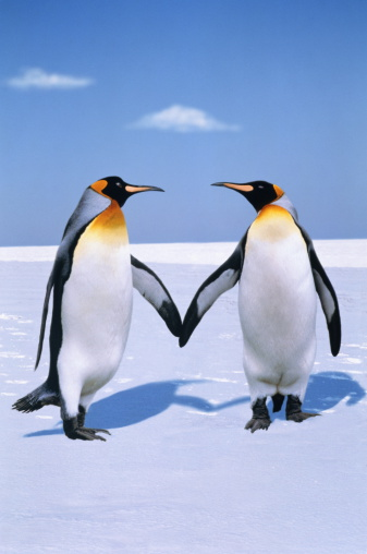 Walking「King penguins (Aptenodytes patagonicus) (Digital Composite)」:スマホ壁紙(10)