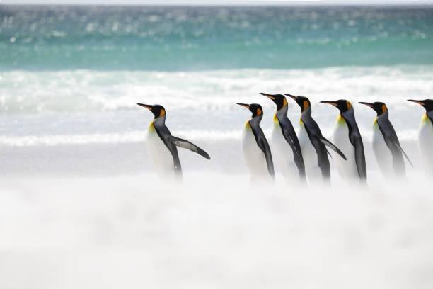 King penguins running into sea:スマホ壁紙(壁紙.com)