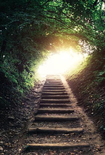 Spirituality「Forest Path」:スマホ壁紙(15)