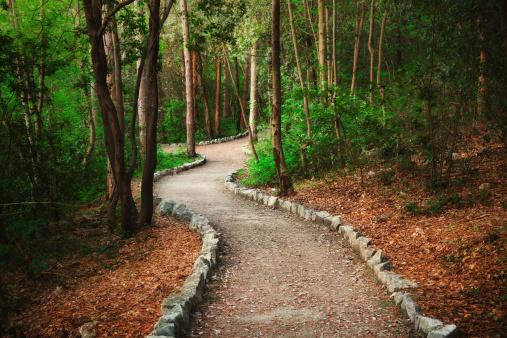 Fairy「Forest path」:スマホ壁紙(8)