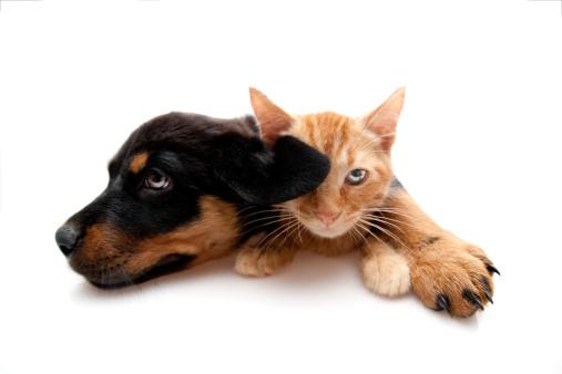 Rottweiler「two buddys」:スマホ壁紙(8)
