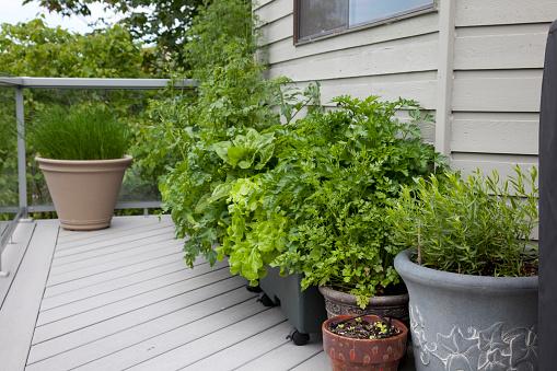 Gardening「Herbs in pots on balcony」:スマホ壁紙(2)