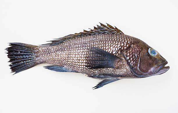 Bass fish, studio shot:スマホ壁紙(壁紙.com)