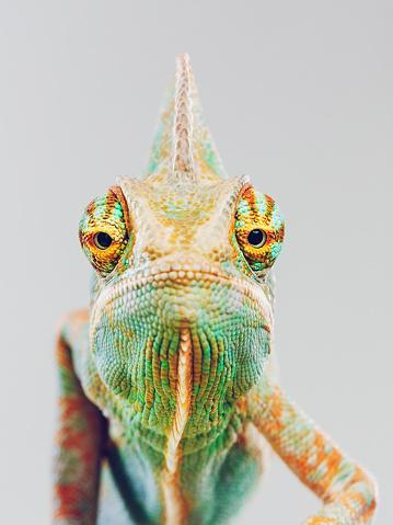 Walking「Cute chameleon looking at camera」:スマホ壁紙(5)