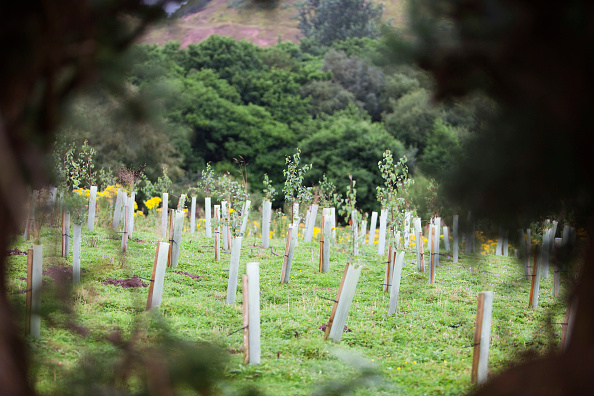 Planting「Sand Martin Wood in Faugh near Carlisle, Cumbria, UK, was acquired by the carbon offset company co2balance in September 2006. It has been planted with a broad mix of native trees over 6 hectares and is managed for wildlife as well as the companies offset」:写真・画像(7)[壁紙.com]
