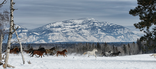 Horse「Horses running in the snow on a ranch in winter」:スマホ壁紙(13)