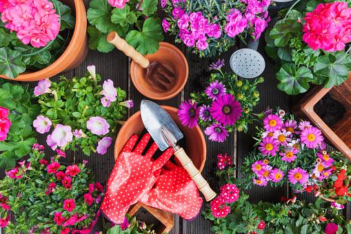 Planting「Gardening, different spring and summer flowers, gardening tools on garden table」:スマホ壁紙(4)