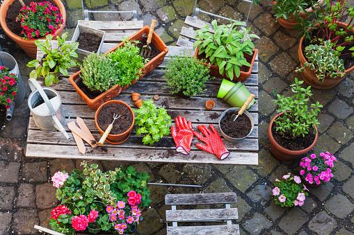 Gardening「Gardening, different medicinal and kitchen herbs and gardening tools on garden table」:スマホ壁紙(18)