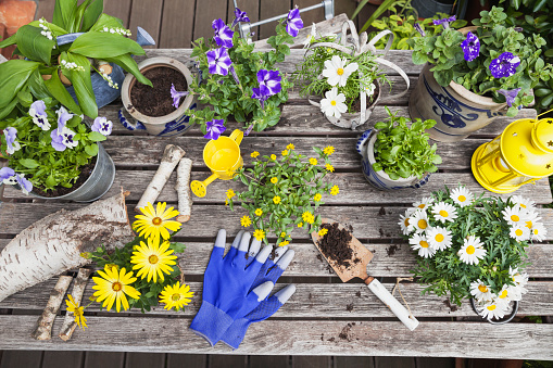 Gardening「Different summer flowers and gardening tools on garden table」:スマホ壁紙(16)