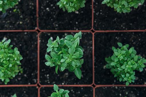 Planting「Plants in pots」:スマホ壁紙(14)