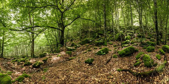 Remote Location「France, Pyrenees, Northern Catalonia, Valle de Orlu, forest」:スマホ壁紙(12)