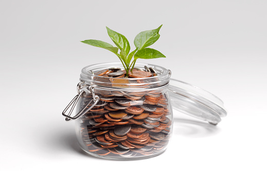 Seedling「Savings with shoots growing」:スマホ壁紙(14)