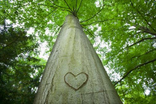Heart「Love heart carved on tree」:スマホ壁紙(0)