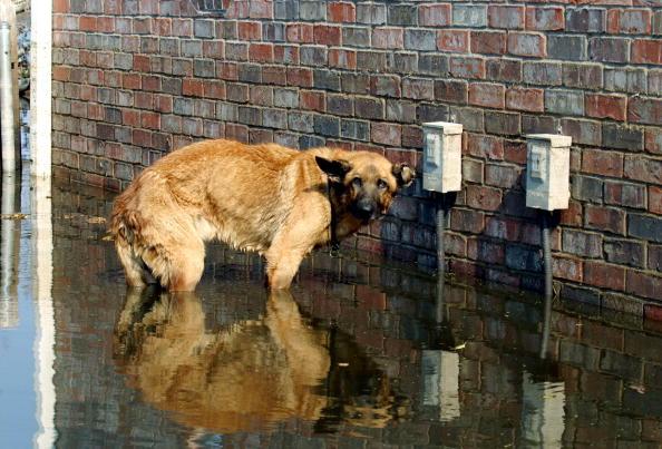 Emergency Shelter「Hurricane Katrina Aftermath - Day 13」:写真・画像(19)[壁紙.com]