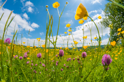 Wildflower「Wild Flowers In A Meadow」:スマホ壁紙(2)