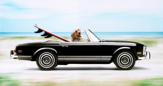 Driving「Surfer dog」:スマホ壁紙(12)