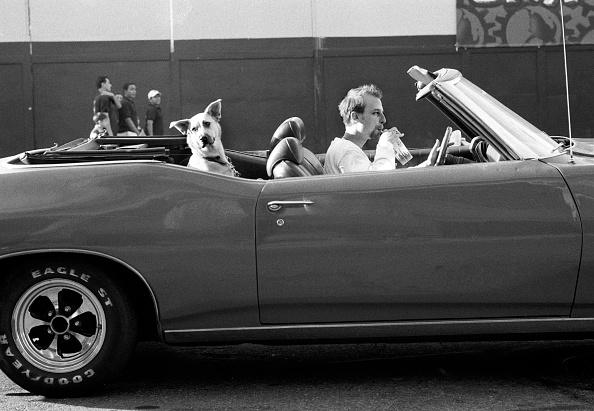 Tom Stoddart Archive「A Dog, Man's Best Friend」:写真・画像(4)[壁紙.com]