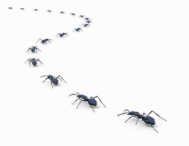 Ants marching in a line:スマホ壁紙(壁紙.com)