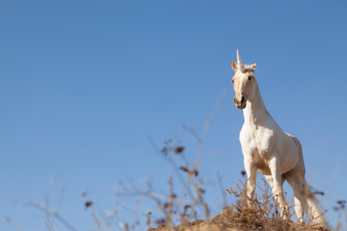 Three Quarter Length「Unicorn on hilltop」:スマホ壁紙(14)