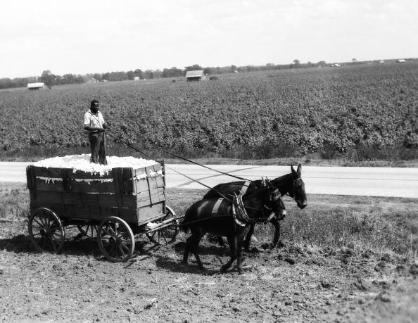 田畑「Cotton farmer」:写真・画像(17)[壁紙.com]