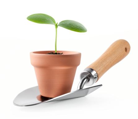 Seed「Sprout in a garden pot.」:スマホ壁紙(19)