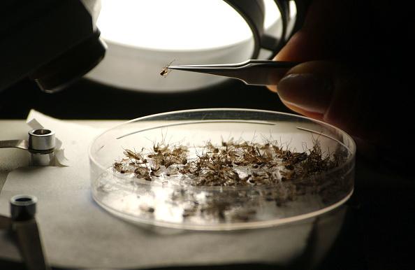 Horse「Summer Brings Threat Of Mosquito-Borne Diseases」:写真・画像(3)[壁紙.com]