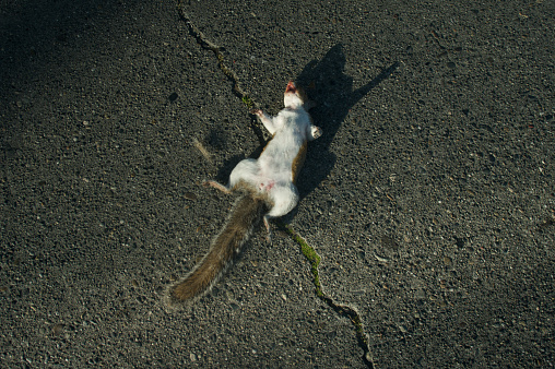 質感「Dead Squirrel」:スマホ壁紙(14)
