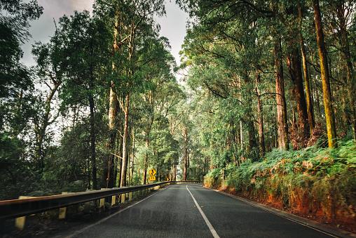 Driving「on the road inside the yarra ranges national park」:スマホ壁紙(4)