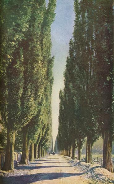 Avenue「France」:写真・画像(9)[壁紙.com]