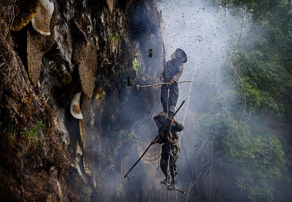 Working「Yunnan Honey Hunters Scale Cliffs For Liquid Gold」:写真・画像(0)[壁紙.com]