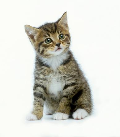 Cat「Oh really」:スマホ壁紙(3)